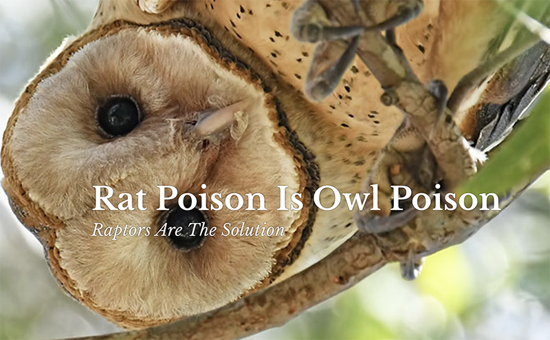 Rat poison is owl poison